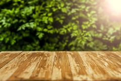 Empty rustic wood table top on blurred parsley  background in th Royalty Free Stock Images