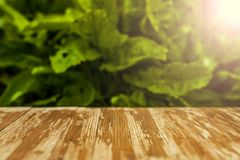 Empty rustic wood table top on blurred sorrel background in the. Garden. Can montage or display your products Stock Photo