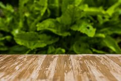 Empty rustic wood table top on blurred sorrel background in the. Garden. Can montage or display your products Royalty Free Stock Image