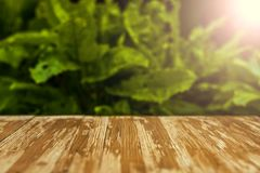 Empty rustic wood table top on blurred sorrel background in the. Garden. Can montage or display your products Royalty Free Stock Photography