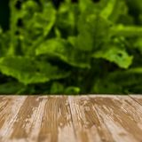 Empty rustic wood table top on blurred sorrel background in the. Garden. Can montage or display your products Stock Photography