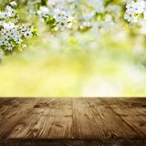Wooden table with spring blossoms Royalty Free Stock Photos
