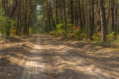 Empty sandy road in pine forest Royalty Free Stock Images