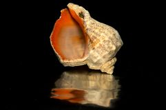 Empty sea shell Stock Photography