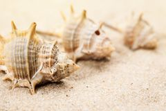 Empty seashells in the sand on a beach.  royalty free stock photos