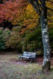 Empty seat and colorful maple leaves background at serene garden. The landscape image of empty seat and colorful leaves background at serene garden, Arashiyama Royalty Free Stock Photos