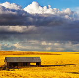 Empty shed in field after harvesting Stock Photo
