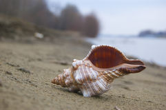 Empty shell on the beach Royalty Free Stock Photos