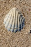 Empty shell on sand Stock Images