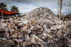 Empty shells of fresh harvested oysters farm in France.  Royalty Free Stock Photos