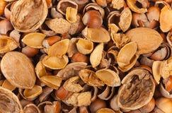 Empty shells of walnuts hazelnuts almonds Royalty Free Stock Image