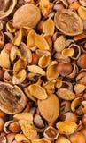Empty shells of walnuts hazelnuts almonds Royalty Free Stock Photos