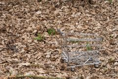 Empty shopping cart in autumn leaves. Autumn shopping Stock Images