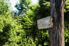 Empty sign directions on a tree in a green summer forest. Self-made rectangular board form pointer with space for text on nature. Background. Brown blank path royalty free stock photos