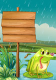 An empty signboard and a frog under the rain Royalty Free Stock Image