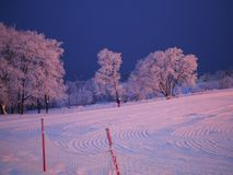 Empty ski track with clean smooth snow and traces of snow snowcat on the background of white trees covered with frost stock photo