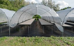 Empty small cactus plant nursery tent at the farm different cactus stock images