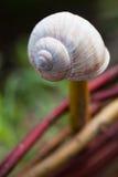 Empty snail shell Royalty Free Stock Photos
