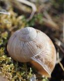 Empty snail shell on the moss stock photos