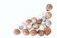 Empty snail shells Royalty Free Stock Photo