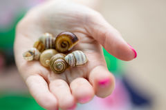 Empty snail shells in a human& x27;s hand Stock Image