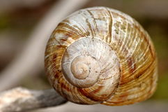 Empty snail shell. Isolated on blurred background Stock Images