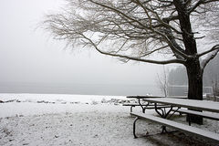 Empty snow covered park in winter. A tree and picnic tables sit in an empty snowy park in winter Royalty Free Stock Photos