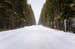 Empty Snowy Forest Road Stock Photos