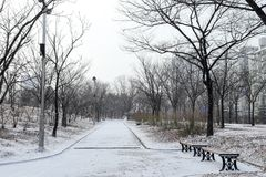 Empty snowy park on a cold day Stock Images