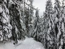 The empty snowy path of the Bowen Island Lookout trail, on Cypress Mountain outside of Vancouver, British Columbia, Canada. Freshly fallen snow covers groves stock images