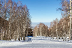 Empty snowy trail through the birch grove Stock Image