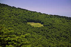 Empty space in pine forest. On mountain royalty free stock photography