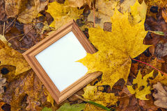 Empty square wooden frame in the yellow fallen leaves. Top view Royalty Free Stock Photography