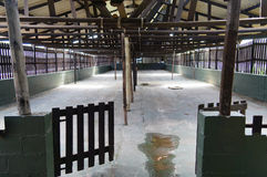 Empty stall in ostrich farm,Cape Town,South Africa. Stock Photography