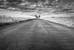 Empty straight long asphalt road. Black and white Royalty Free Stock Photos