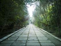 Empty street at the nice and comfortable garden at the morning. stock photos