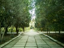 Empty street at the nice and comfortable garden at the morning. royalty free stock photo