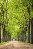 The empty street-road with the beautiful big green trees along both side. The empty road with the beautiful big green trees both side in cubbonpark bangalore royalty free stock images