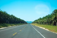 Empty streets and palm sides. At the Dominican republic Stock Images