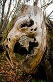 Empty stump trunk Stock Photography