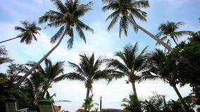 Empty sunbeds in tropical resort at the beach. Koh. Samui. Thailand.  1920x1080 stock footage