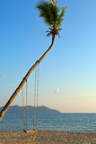 Empty swing hanging from a tree on romantic Royalty Free Stock Photo