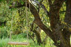 Empty swing in the park Royalty Free Stock Images