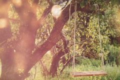 Empty swing in the park Royalty Free Stock Photography