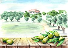 Empty table with olive brunch in olive grove landscape.. Watercolor hand drawn background Stock Photography