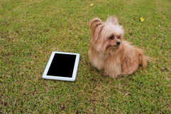 Empty Tablet with Dog Stock Photo