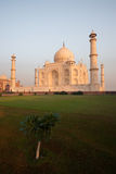 Empty Taj Mahal and Lawn Tree at Sunrise Royalty Free Stock Photos