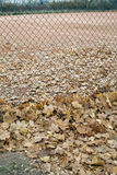 Empty tennis court and many fallen leaves in autumn park Royalty Free Stock Photos