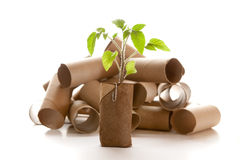 Empty toilet paper roll made into a planter Royalty Free Stock Photography