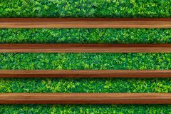 Empty top of wooden shelves on Green leaves wall background, For Stock Image